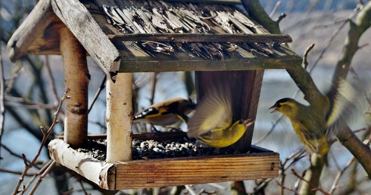 Mądre dokarmianie ptaków