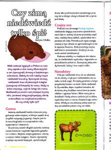 Czy zimą niedźwiedź tylko śpi Tropami Przyrody Nr 6 (8) 2011_0001