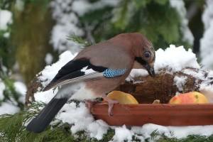 bird-655298_1280