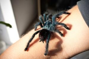 spider-629902_1920