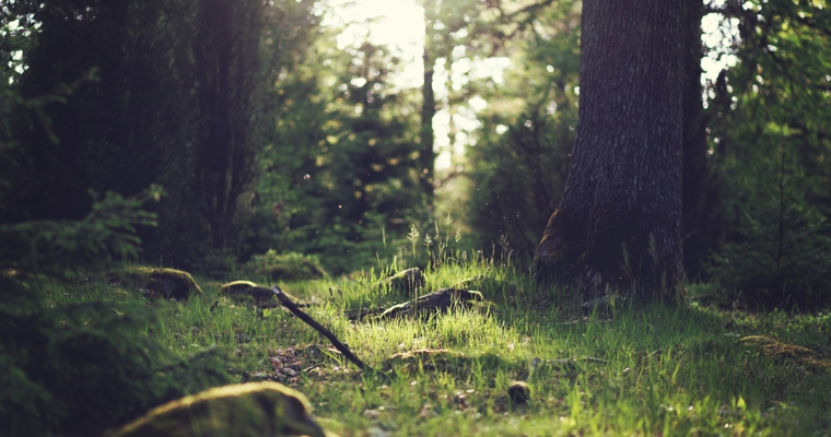 Naturalny związek człowieka z przyrodą